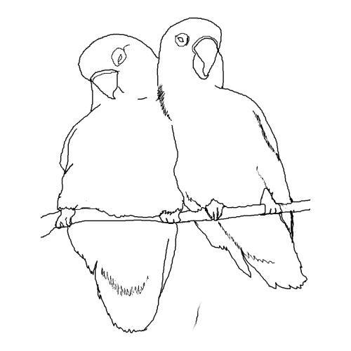 两只鹦鹉_动物简笔画-e学堂