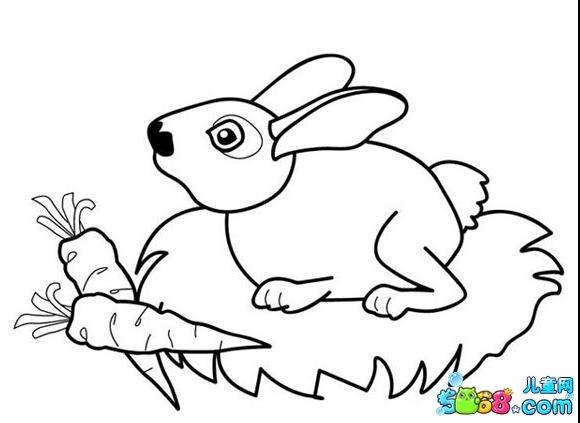 小兔子吃萝卜图片