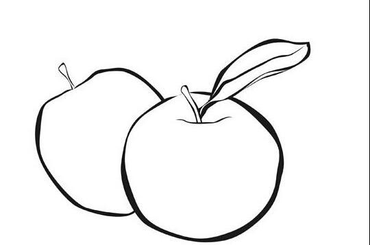 两个苹果_植物简笔画-e学堂
