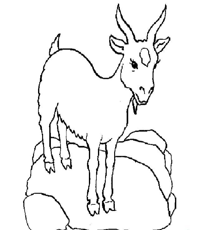 冷傲的山羊_动物简笔画-e学堂