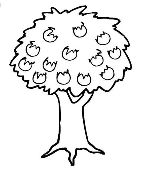 苹果树_植物简笔画-e学堂