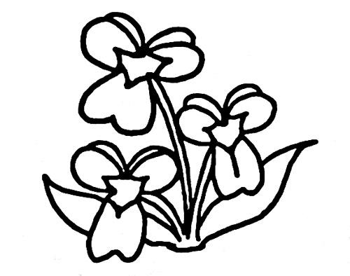 康乃馨的画法简笔画