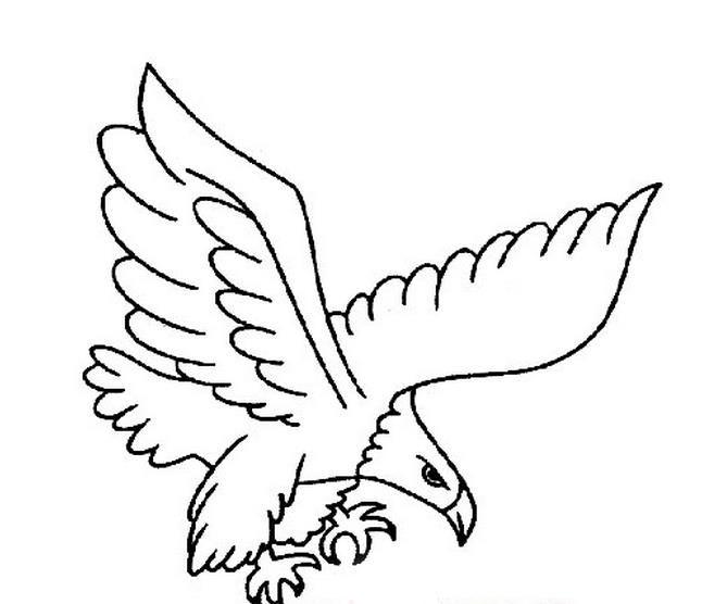 皇冠圆形大边框展翅
