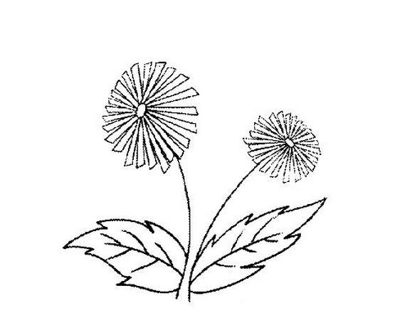 小稚菊手绘