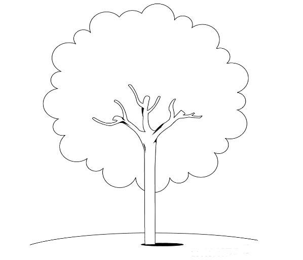 树简笔画图片大全