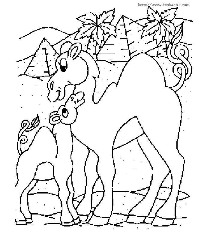 可爱的小骆驼