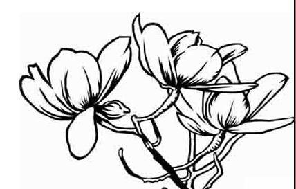 盛开的花_植物简笔画-e学堂