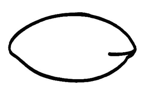 椭圆的画法简单画法