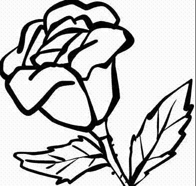 盛开的玫瑰花_植物简笔画-e学堂