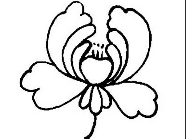 鲜花简笔创意手绘