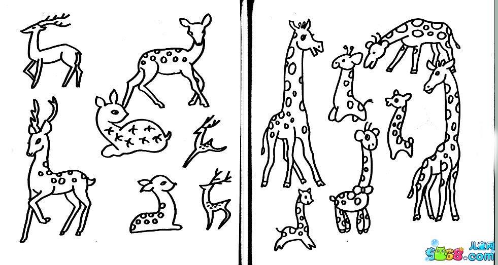 梅花鹿和长颈鹿