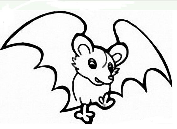 可爱的小蝙蝠_动物简笔画-e学堂