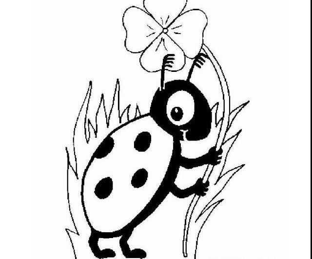 多可爱的七星瓢虫_动物简笔画-e学堂