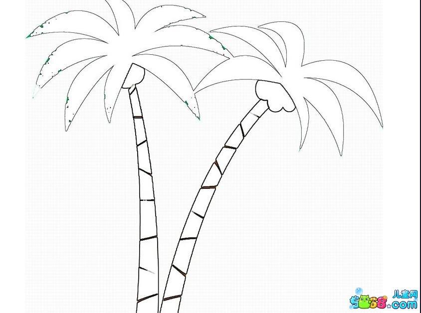 高大的椰子树