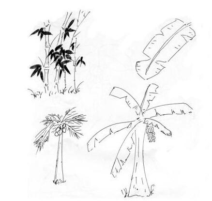 竹子和椰子_植物简笔画-e学堂