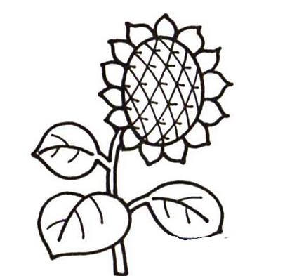 简单漂亮的向日葵_植物简笔画-e学堂