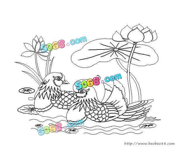 荷花植物平面手绘
