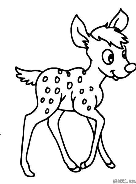 漂亮的梅花鹿