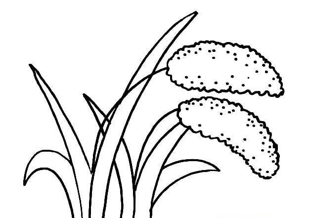 小学节约粮食简笔画