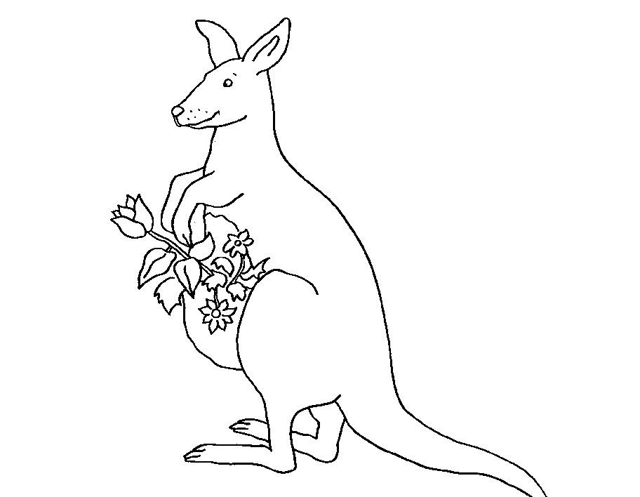 袋鼠图片简笔画