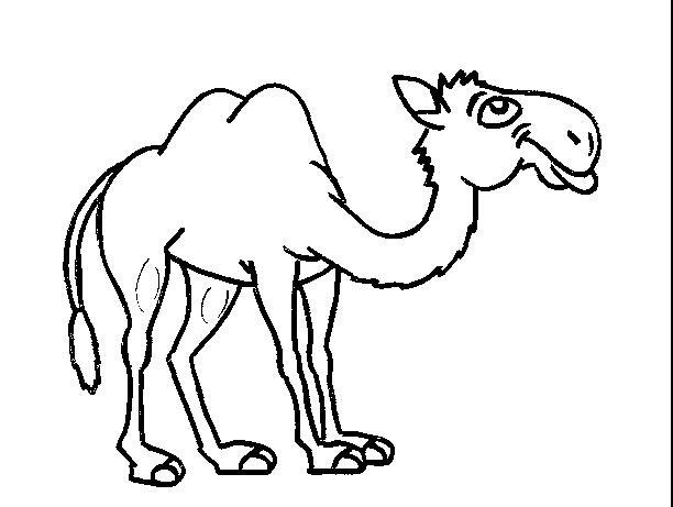 耐渴的骆驼_动物简笔画-e学堂