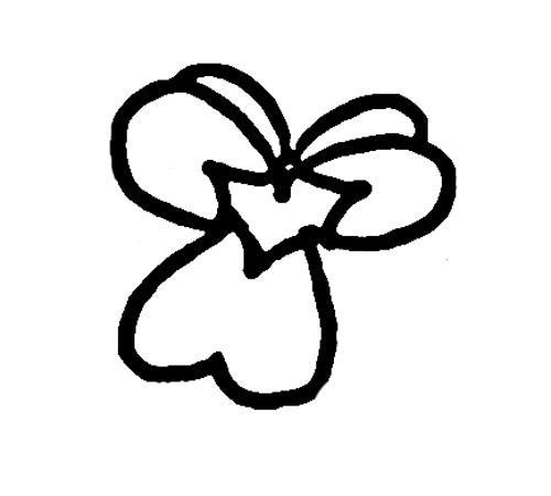 康乃馨简笔画简笔画
