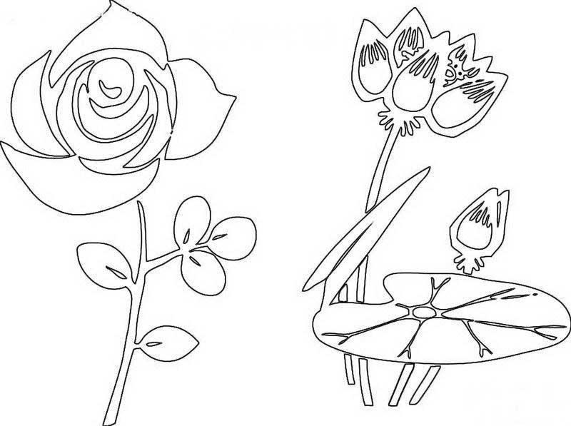手绘植物写生的手抄报