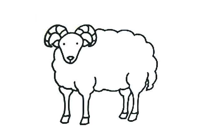 可爱小绵羊_动物简笔画-e学堂