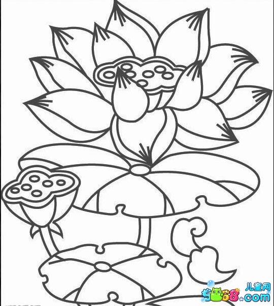 莲蓬画法笔画步骤