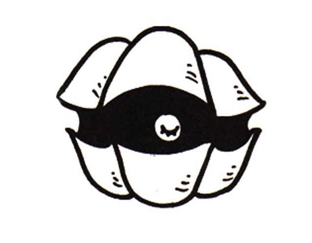贝壳图片简笔画